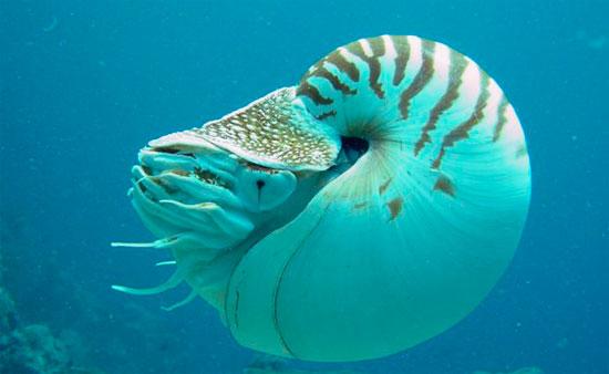 моллюски головоногие фото